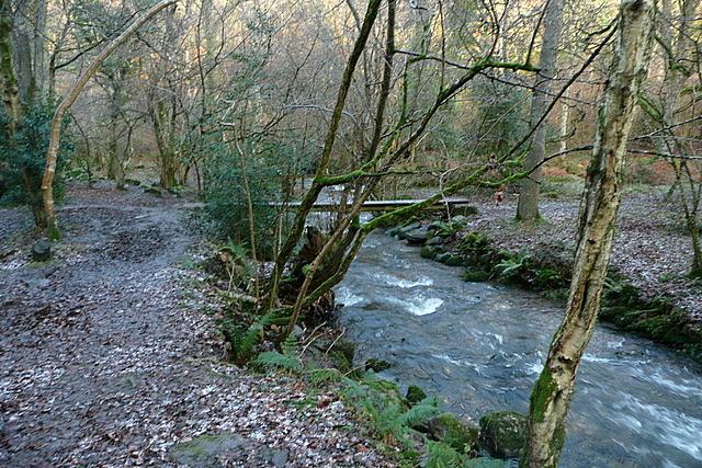 Footbridge in Horner Wood