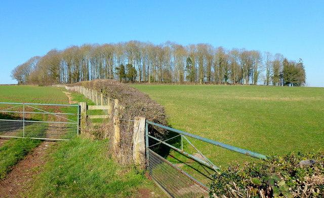 Little Sarnesfield Wood