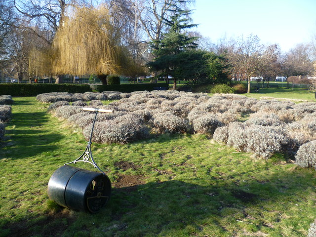 Lavender garden in Vauxhall Park