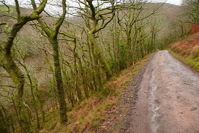 Track in Hawkcombe Woods