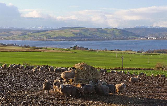 Farmland of the Black Isle near Culbokie