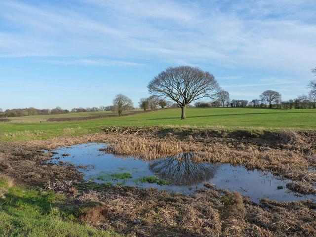 A pond near Lythwood Hall in winter