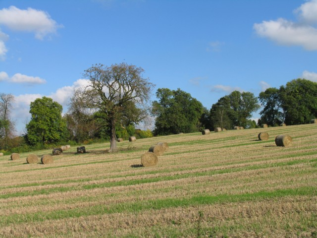 Harvest time by New Lane