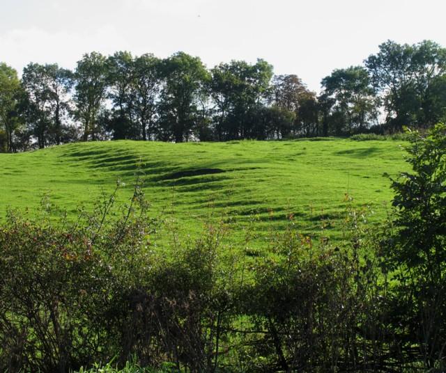 Streaky field