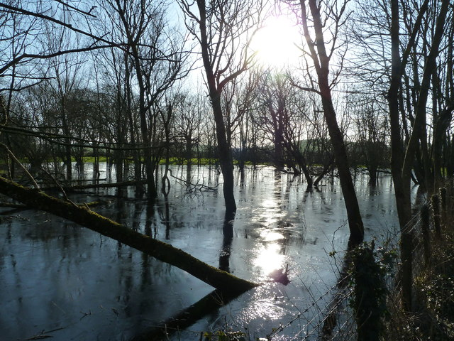 Flooded woodland