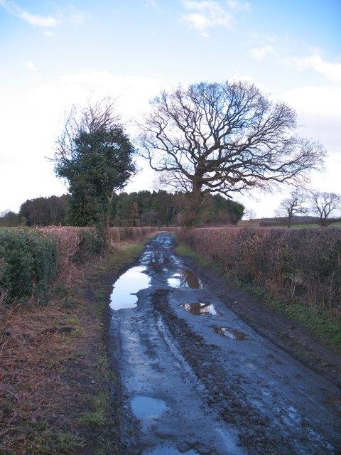 Green lane, Cowthorpe