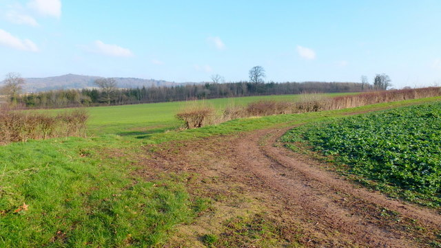 Arable land and Bowmore Wood