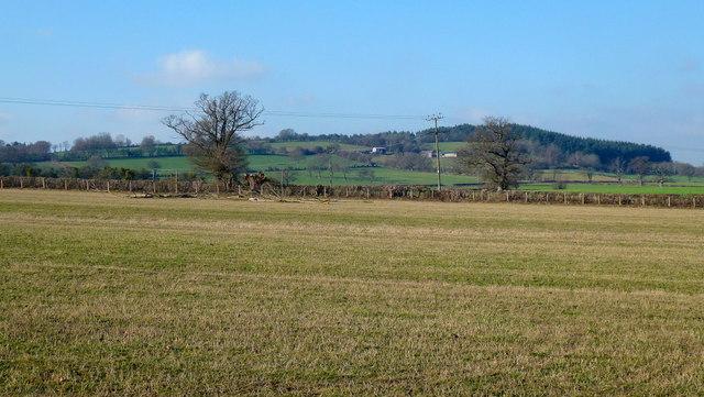 Pastoral scene near Little London