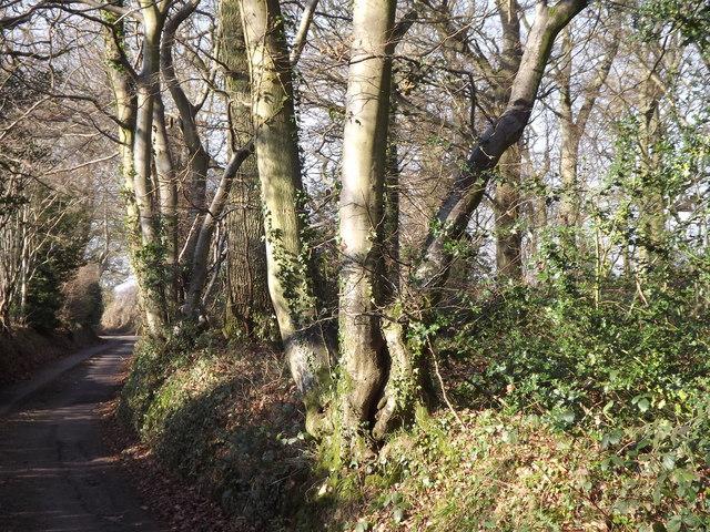 Miller's Wood