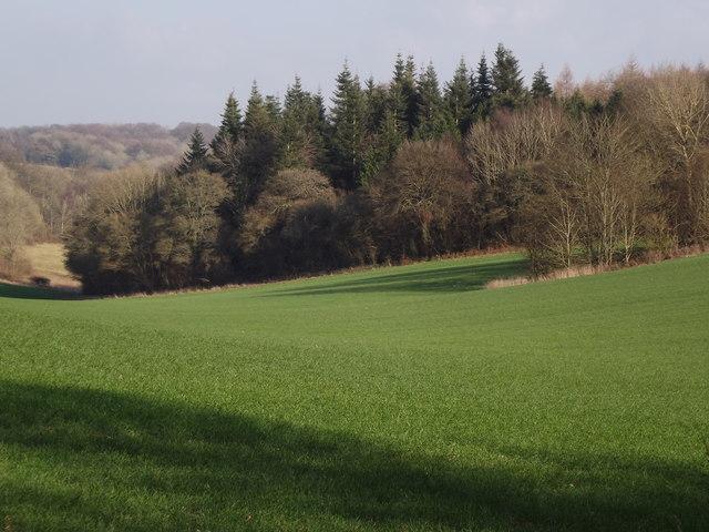 Downland by Heathcroft Farm
