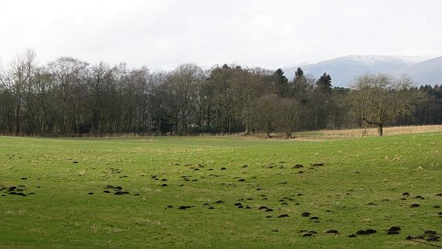 Pasture, Solsgirth