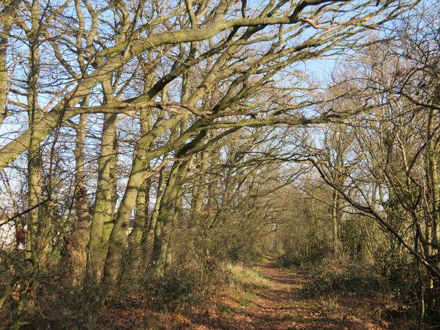 Footpath past Knoxbridge Farm