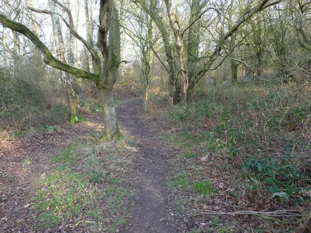 Path in Merrington Green nature reserve