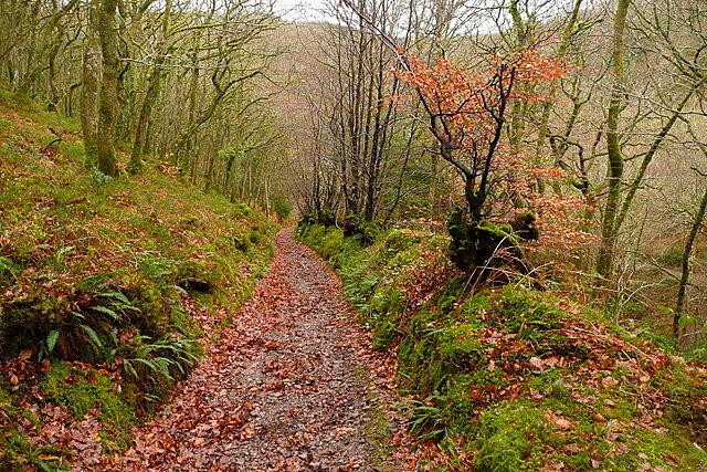 Track in East Lucott Wood
