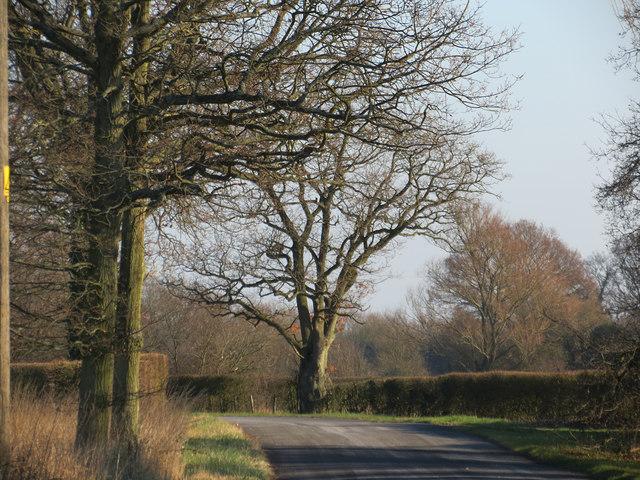 Plumtree Road