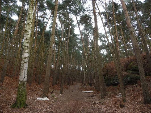 Woodland near Webscott, Shropshire