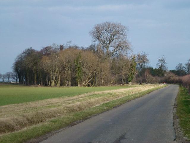 Pasture House Plantation on Willow Hall Lane