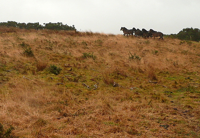 Ponies on Tarr Ball Hill