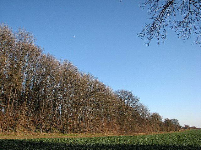 Old railway embankment and the moon