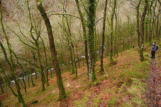 Track in Wilmersham Wood