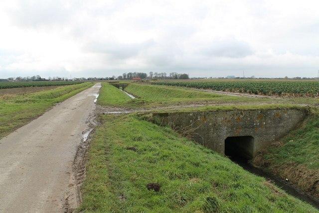 Dotam's Lane