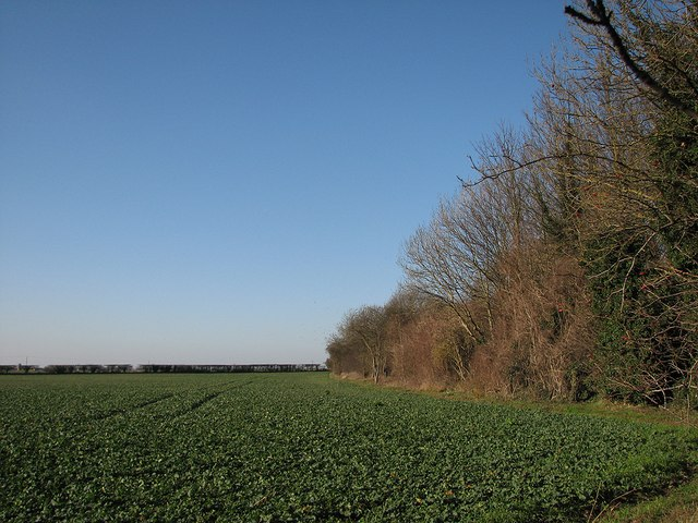 Field, sky and railway remains