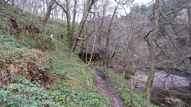 Woodland by Vicar's Bridge