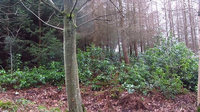 Woodland, Arndean