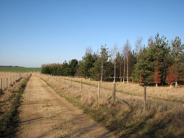 Path and plantation