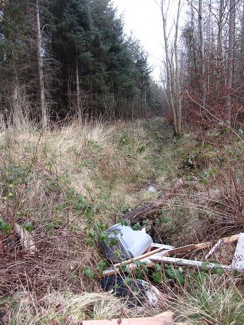 Ditch, Cuddie Wood