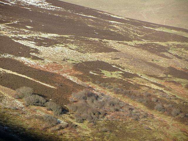 Scrubland, Manse Burn Head