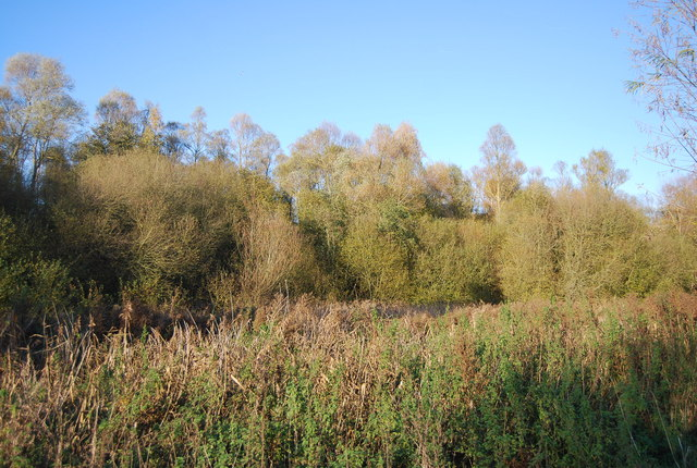 Woodland north of the Great Stour
