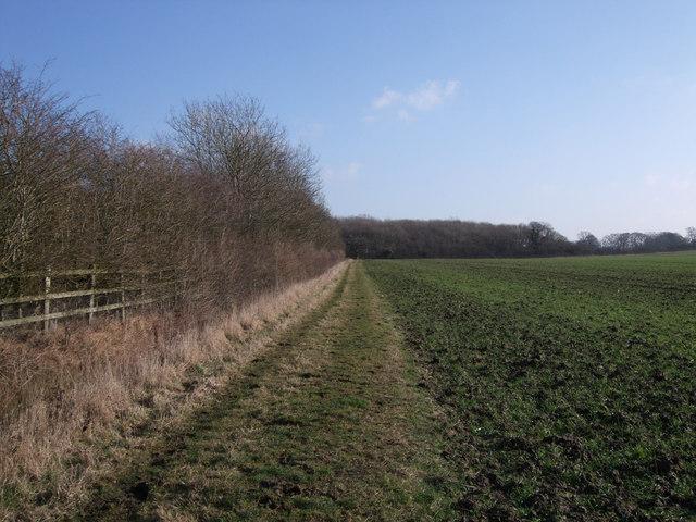 Footpath past Rowleaze Wood