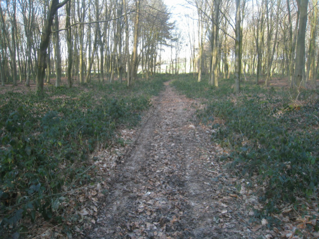 Track within Bull's Bushes Copse