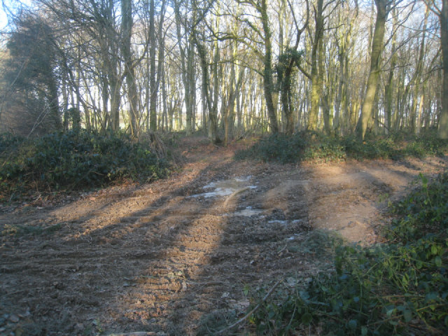 Frozen path in Bull's Bushes Copse