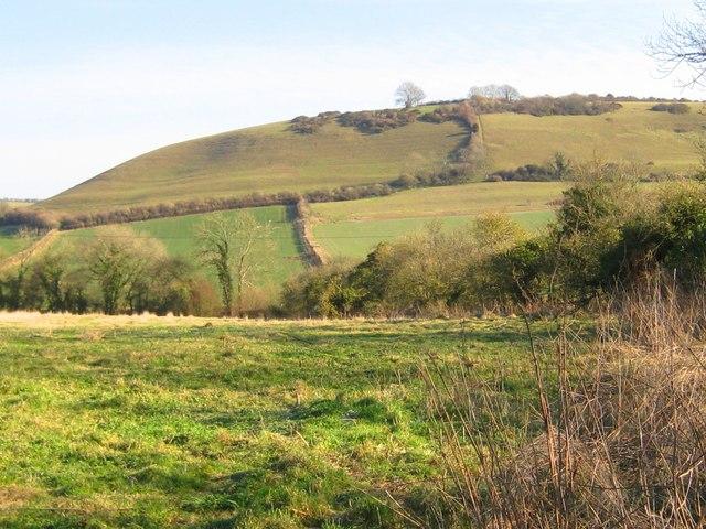 Cowdown Hill - Sydling St Nicholas