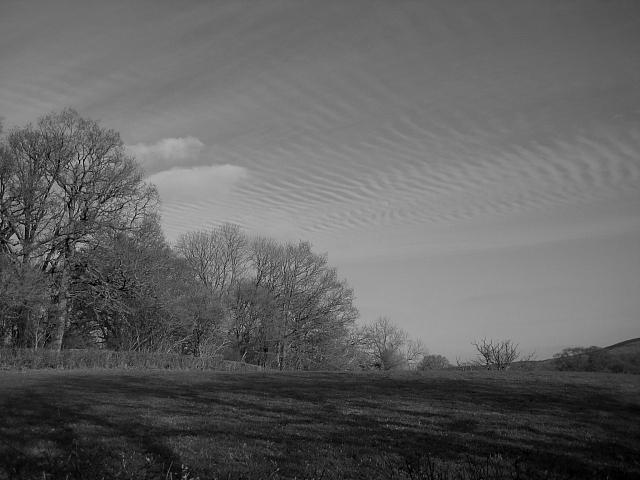 Mackerel Sky Over Furzy Common