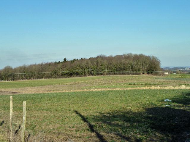 The corner of Crown Wood