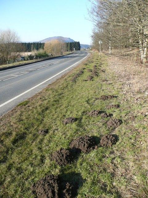 Molehills beside the A9