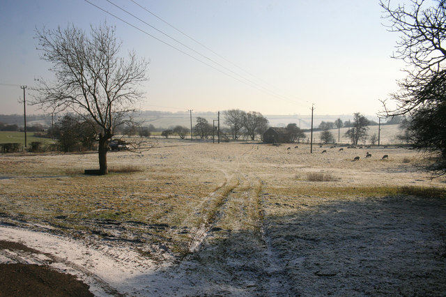 Sheep in the frost