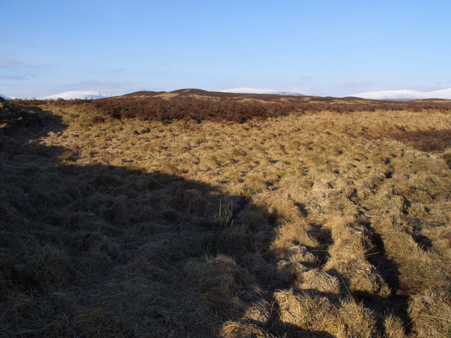 Tufted grasses on the shore of Loch Ba on Rannoch Moor