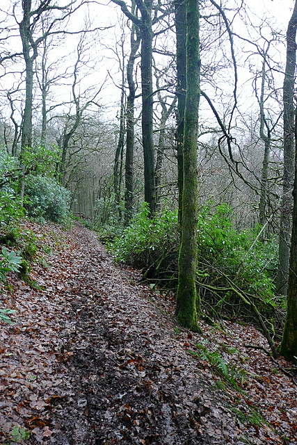 Path in Little Quarme Wood