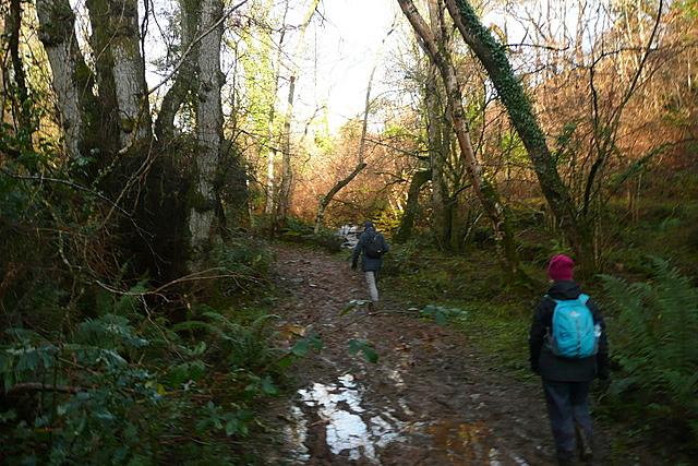 Bridleway following the River Avill