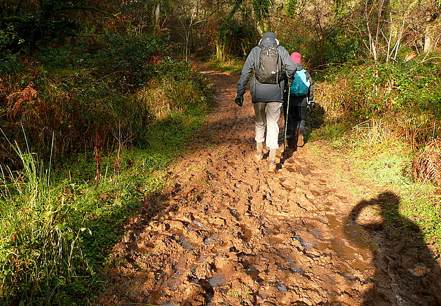 Bridleway following the River Avill