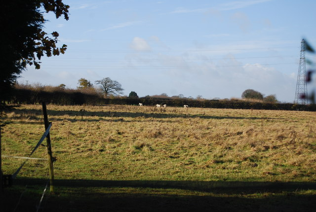 Farmland off Gallant Lane