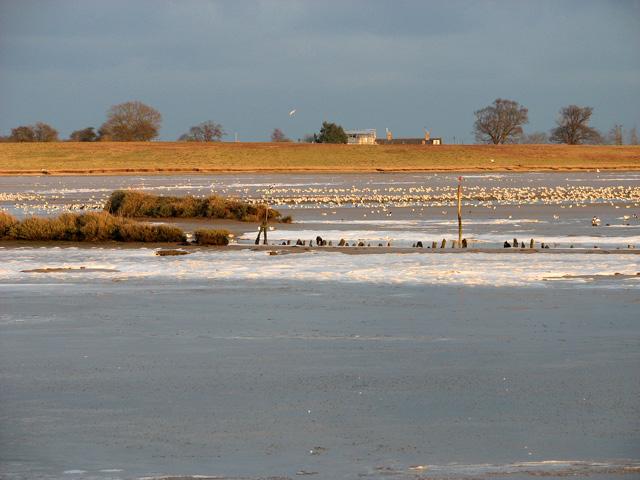Sandpit Covert Marshes, Blythburgh