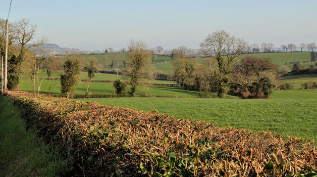Cut hedge near Comber
