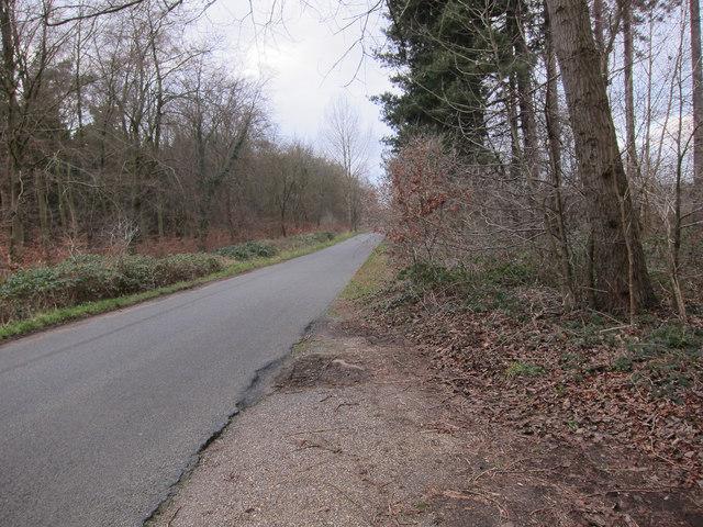 Road through Cranwich Heath