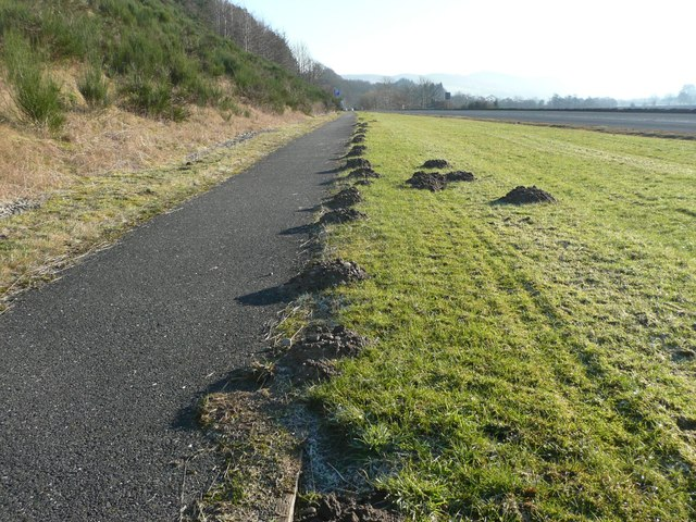 Moles seem to like cycle tracks