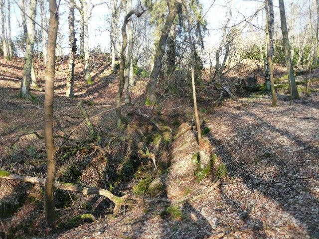 Woods below Cuil an Duin